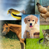 Blue Seal Pet Food Rebate