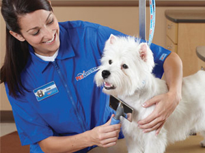 Grooming Deals from PetSmart