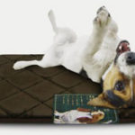 Memory Foam Pet Mat