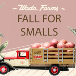 Fall For Smalls Sweepstakes