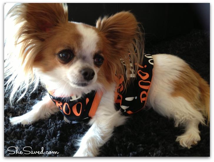 PetSmart Halloween 4