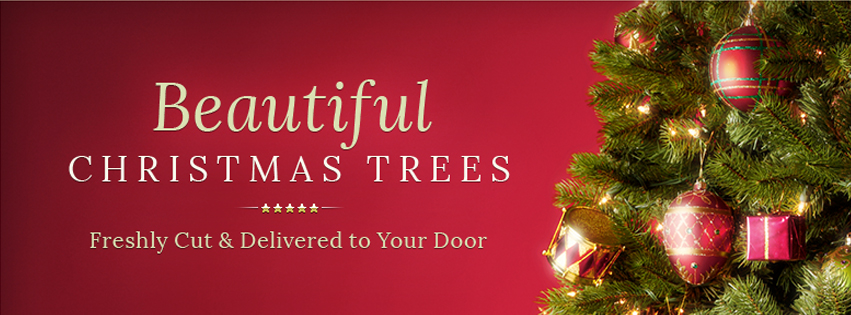 Five Star Christmas Trees Review