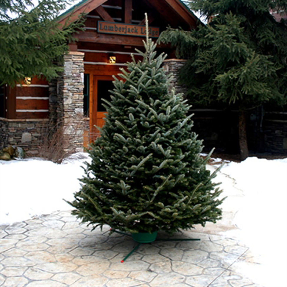 Five Star Christmas Trees SAVE 50%