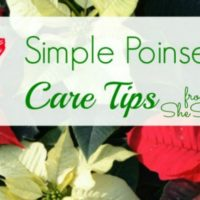 7 Simple Poinsettia Care Tips