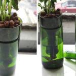 Wine Bottle Planter Basil Kit