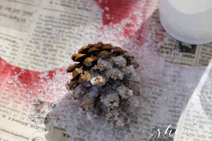 frosted pine cone coat epsom salt to make it sparkly
