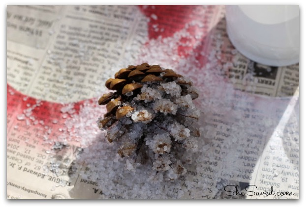 frosted pine cone coat epsom salt