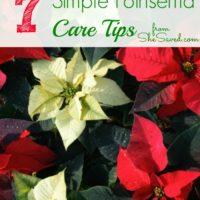 7 Simple Poinsettia Care Tips