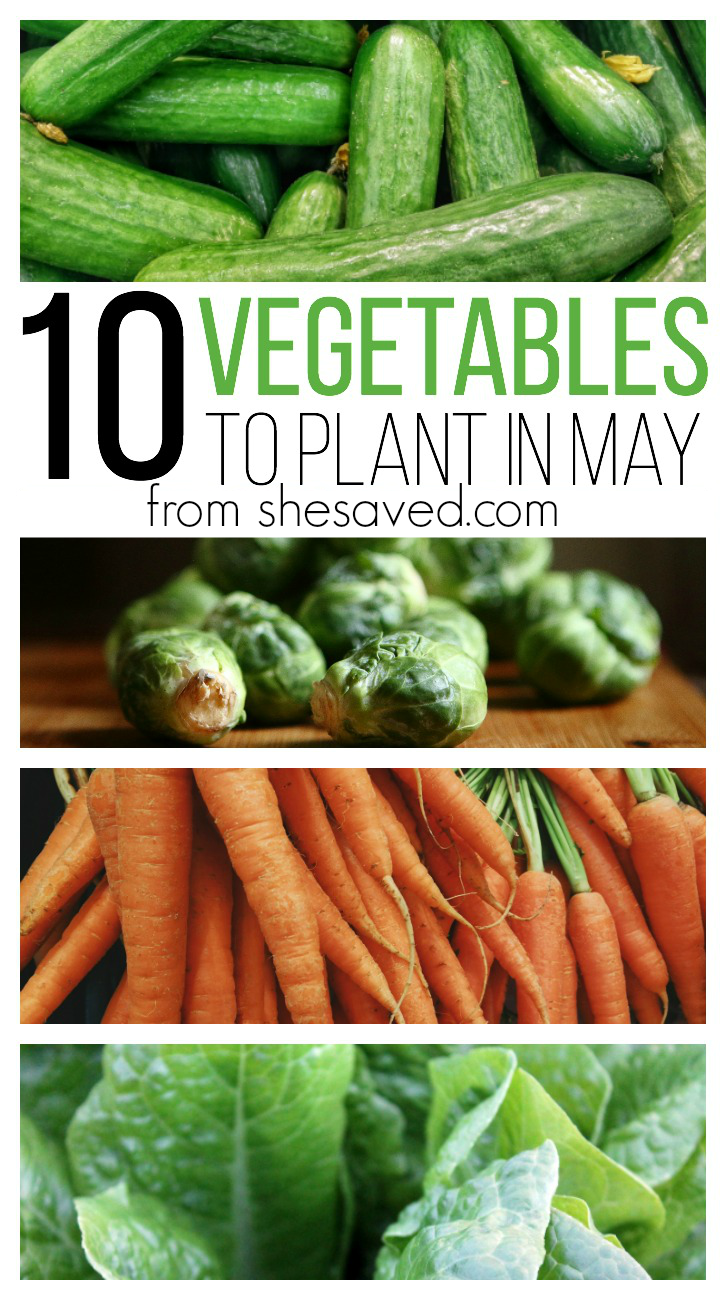 10 Vegetables To Plant In May Shesaved 174