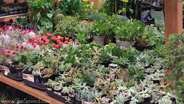 Garden Center Plant