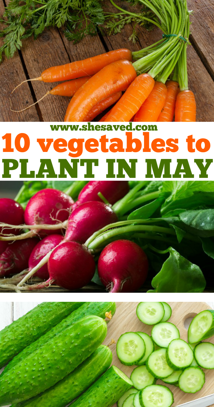 Vegetables to Plant May