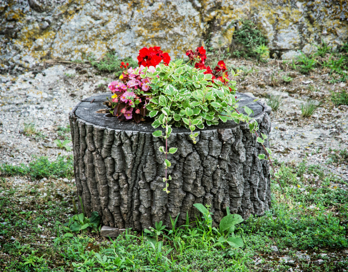 tree stump flower planter