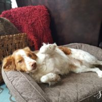 Brentwood Home Dog Bed Review + Giveaway