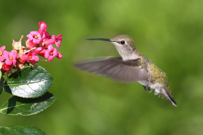 make hummingbird nectar