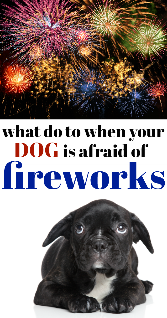 My dog is afraid of fireworks