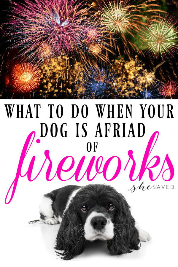 Is YOUR dog afraid of fireworks? Here are some helpful tips that will keep fido happy on the Fourth of July!