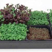 True Leaf Market Hydroponic Microgreens Starter Kit