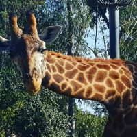 Visit San Diego: Ways to Save on San Diego Travel