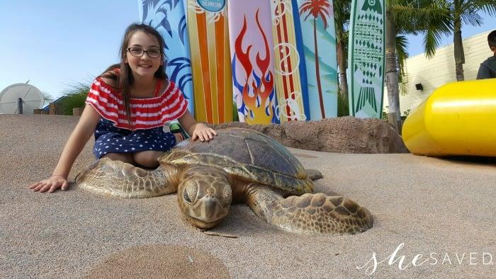 Sea World Turtle