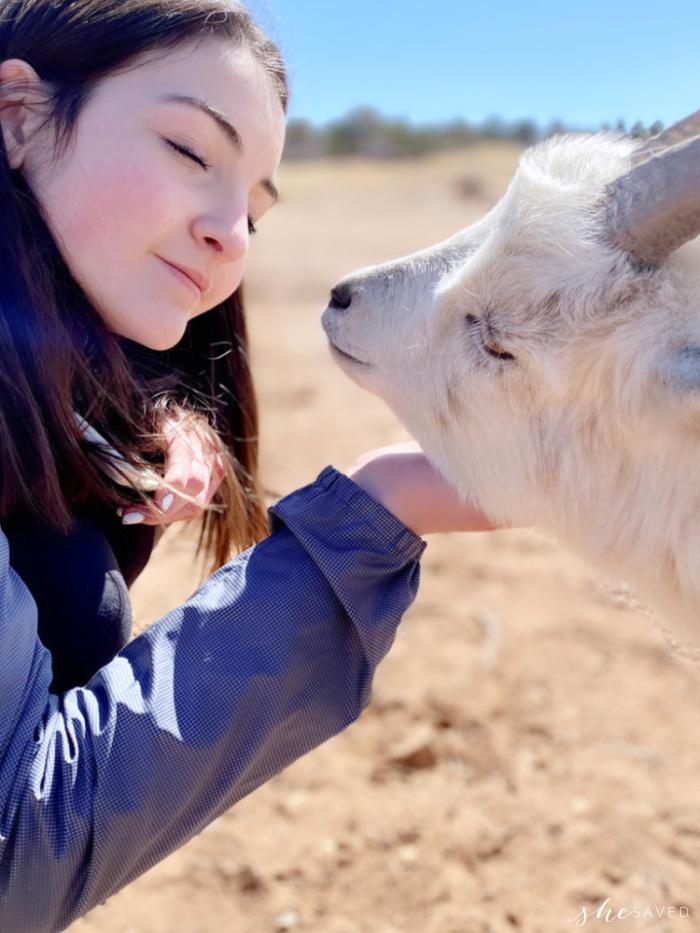 Goats at Zion Ponderosa Ranch