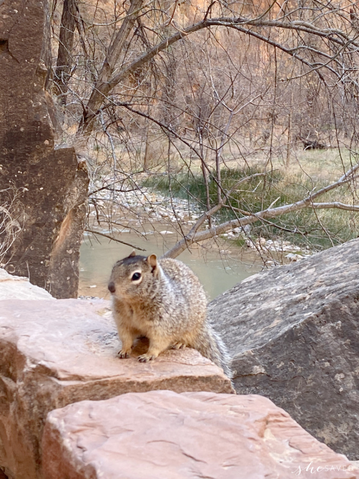 Hike to the Narrows Zion National Park Wildlife sighting