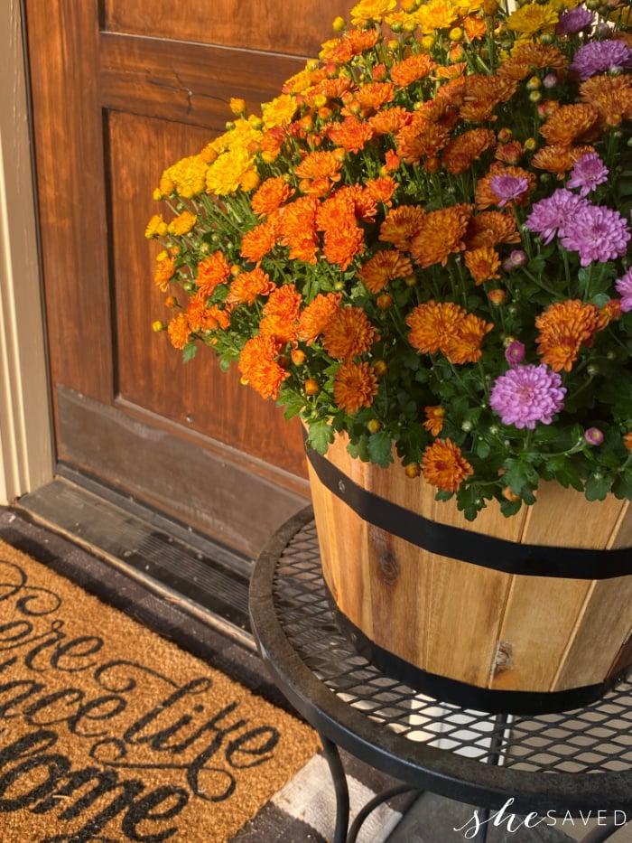 fall flower Chrysanthemum arrangement